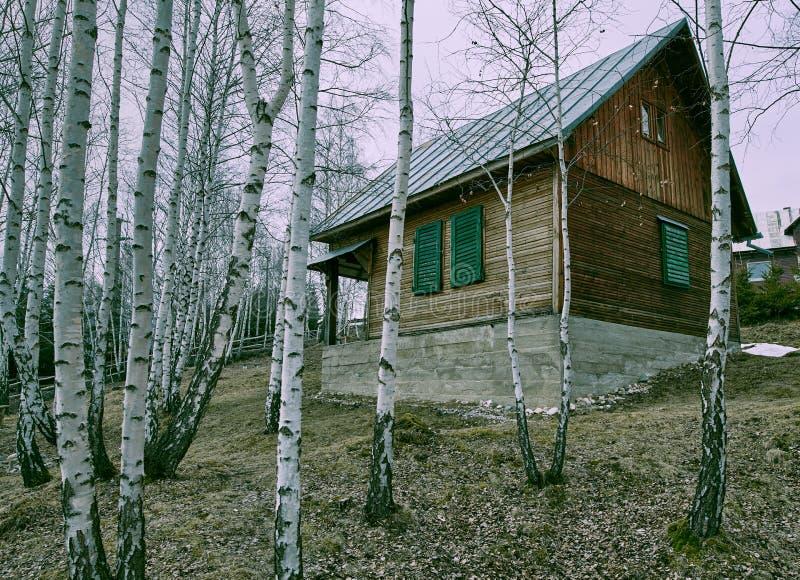 Trästuga i en björkskog fotografering för bildbyråer