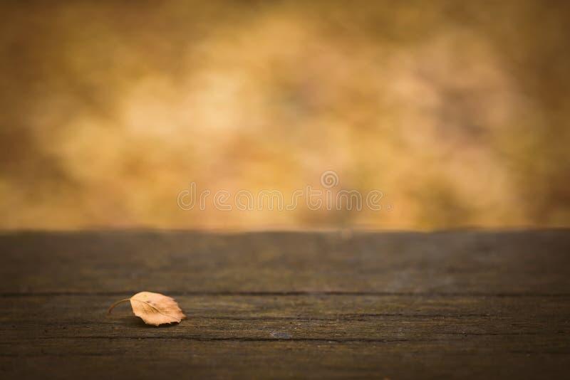 Trätabell med bakgrund för nedgång- eller höstnaturbokeh Suddiga sidor och filialer royaltyfri fotografi