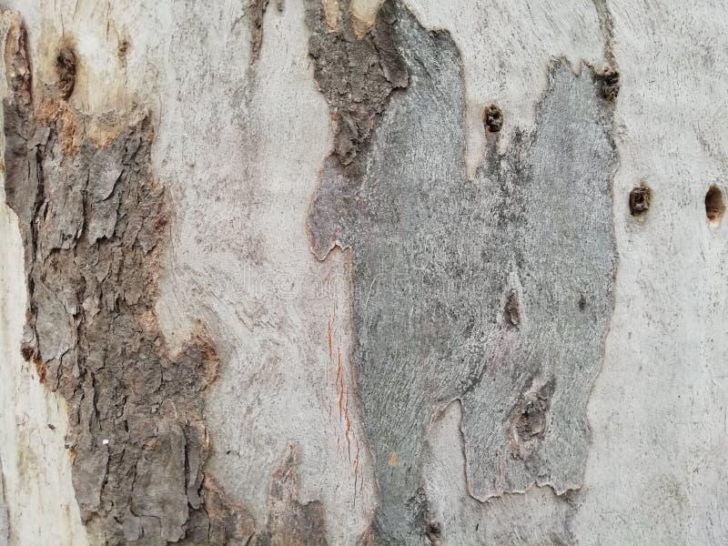 Trätextur, kornig textur, trätexturer, naturtextur, slut, textur, trä, abstractappningljus och mörk trätexturbakgrund arkivbild