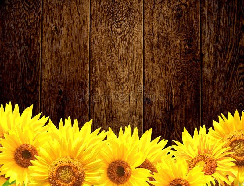 Trätextur och gräns med gula solrosor arkivfoto