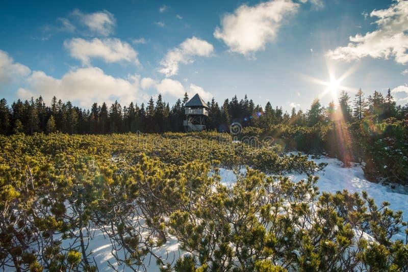 Trätorn i vinter royaltyfri fotografi