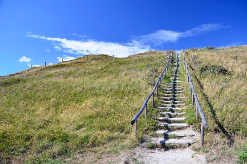 trätrappa som är ledande upp dyn som täckas i gräs i det skyddade landskapet som leder för att sätta på land på ön Texel i Nederl arkivbild