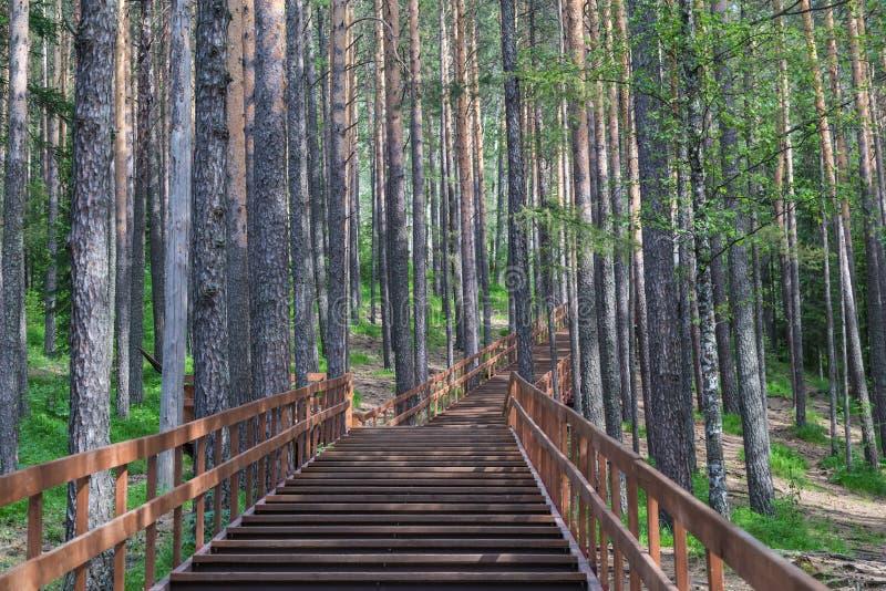 Trätrappan i landskap parkerar Stolby, nära Krasnoyarsk royaltyfria bilder