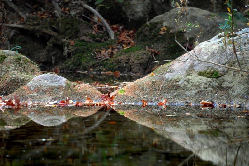 Träumen der Fische mit geschlossenen Augen lizenzfreie stockfotografie