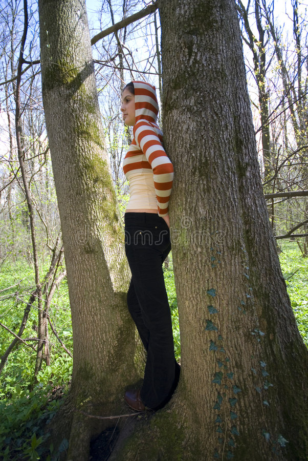 Träumen im Wald lizenzfreie stockfotos