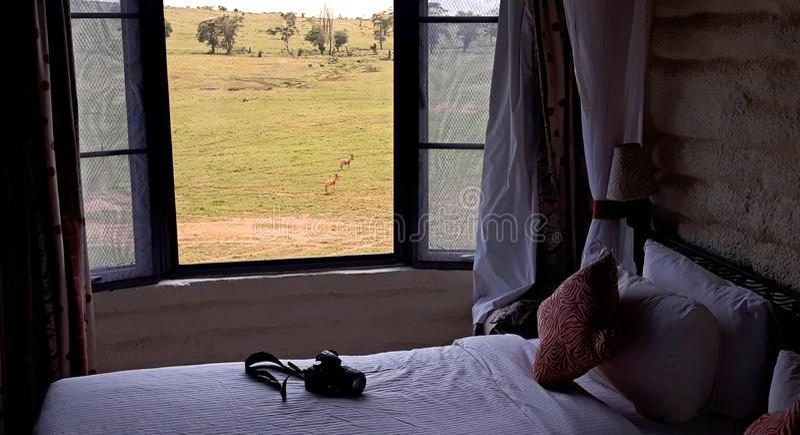 Träumen von Afrika stockfoto