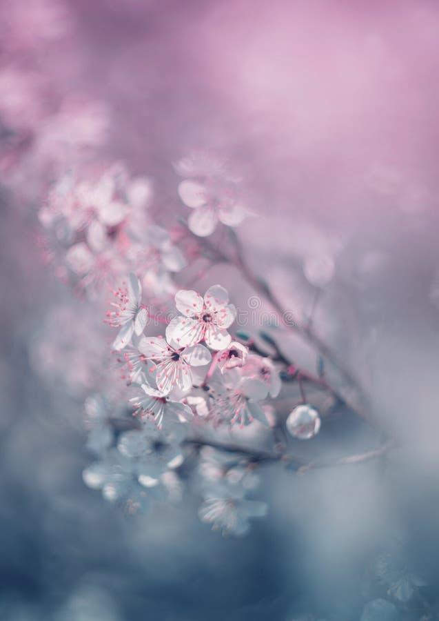 Träumerische Apfel bloosoms stockfotografie