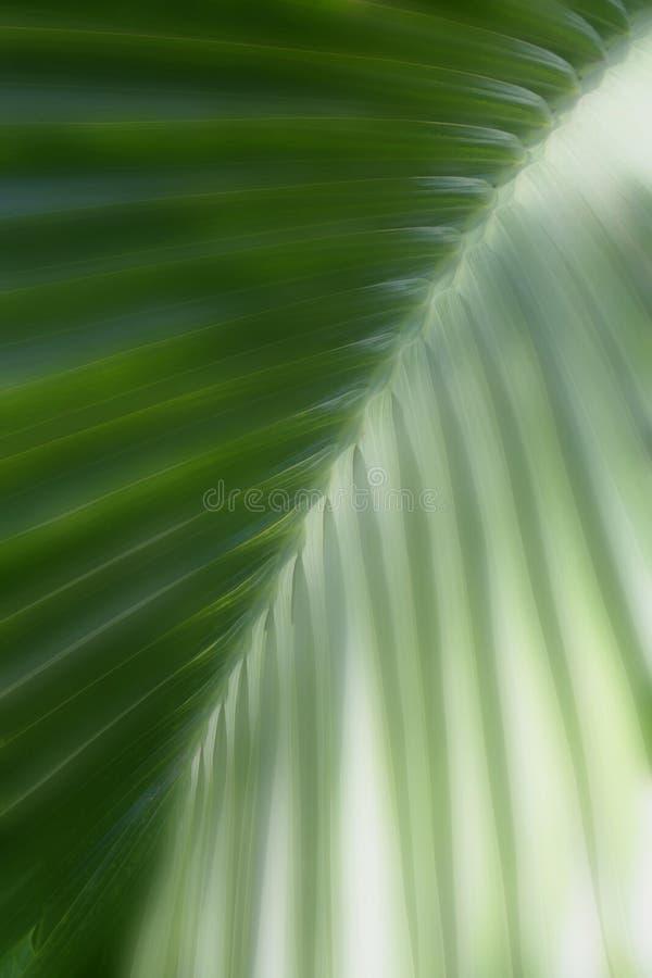 Träumerische grüne Blattbeschaffenheit stockfotografie
