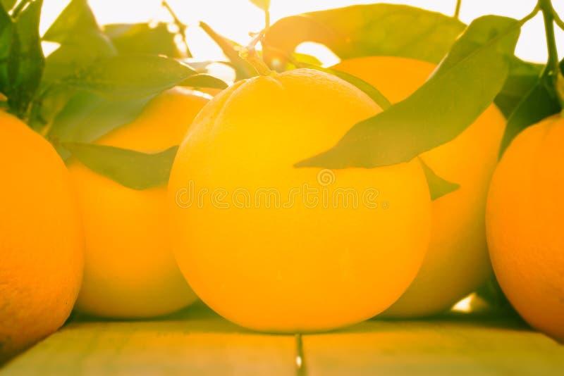 Träumerische Orangen lizenzfreie stockbilder