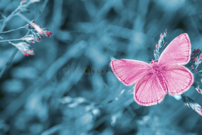 Träumerische Wiese mit Fliegenrosaschmetterling, surrealer Märchenfrühlingsgarten lizenzfreie stockfotografie