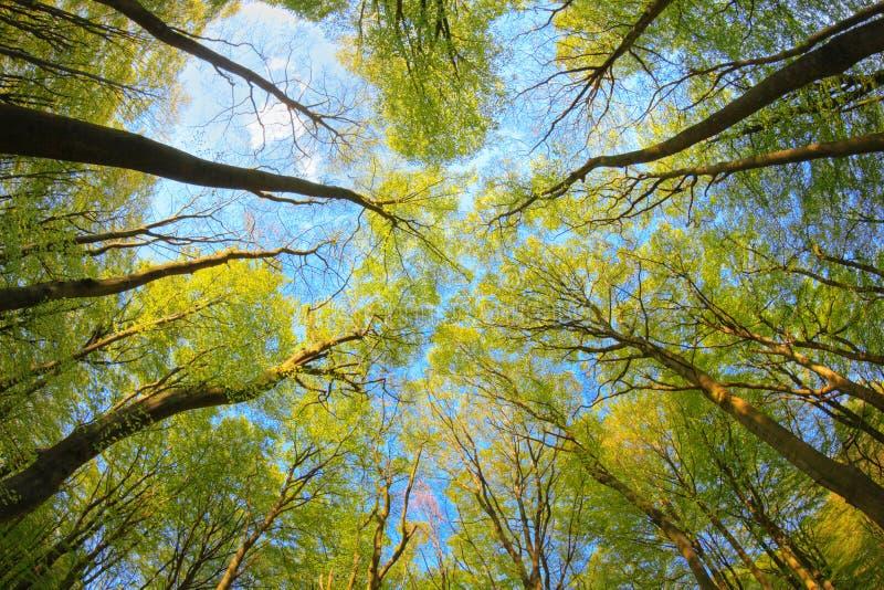 Träumerischer Blick in den Treetops lizenzfreie stockbilder