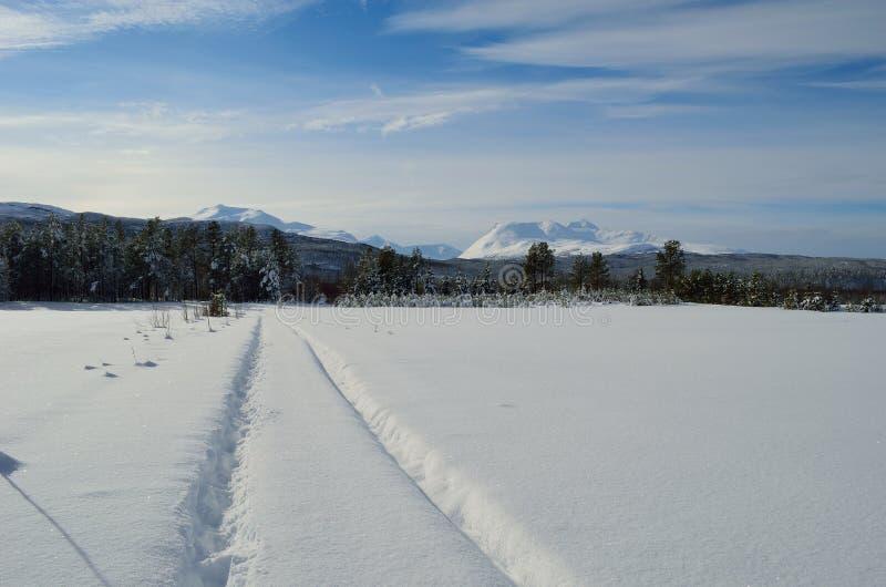 Träumerisches schneebedecktes Feld im Wintersonnenschein mit Berg und Wald lizenzfreie stockfotos