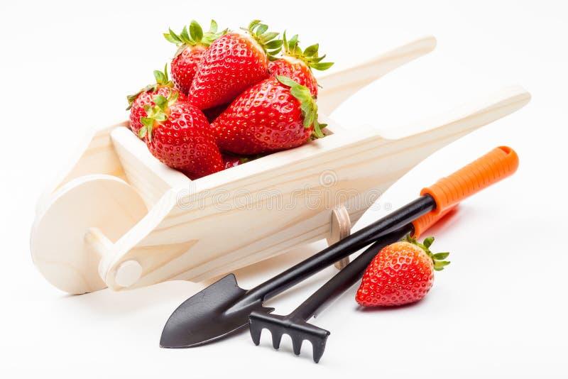 Trävagn av jordgubbar och trädgårds- hjälpmedel royaltyfri foto