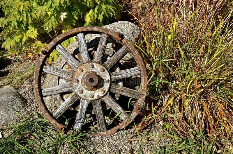 Trävagnhjul för gammal ek royaltyfria foton