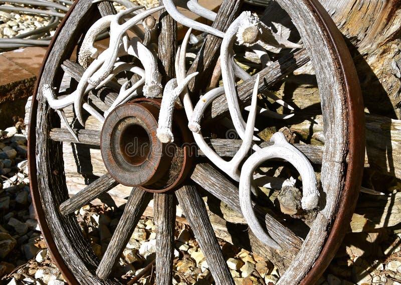 Trävagnhjul som dekoreras med hjorthorn på kronhjort arkivbilder