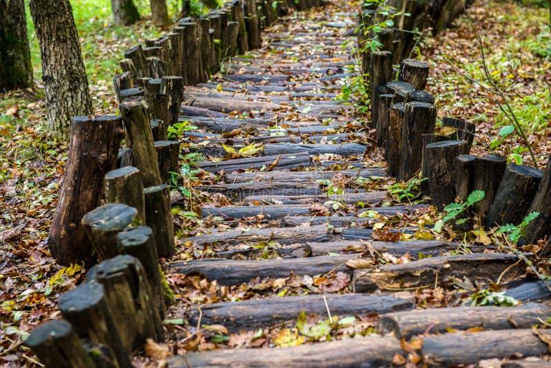 Download Trävandringsled I Skogen Som Behandlar Foten Arkivfoto - Bild av bana, plats: 78730398