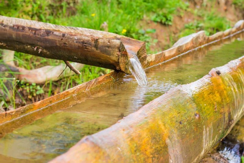 Trävatten som dricker ho för inhemskt nötkreatur i Carpathians royaltyfri foto