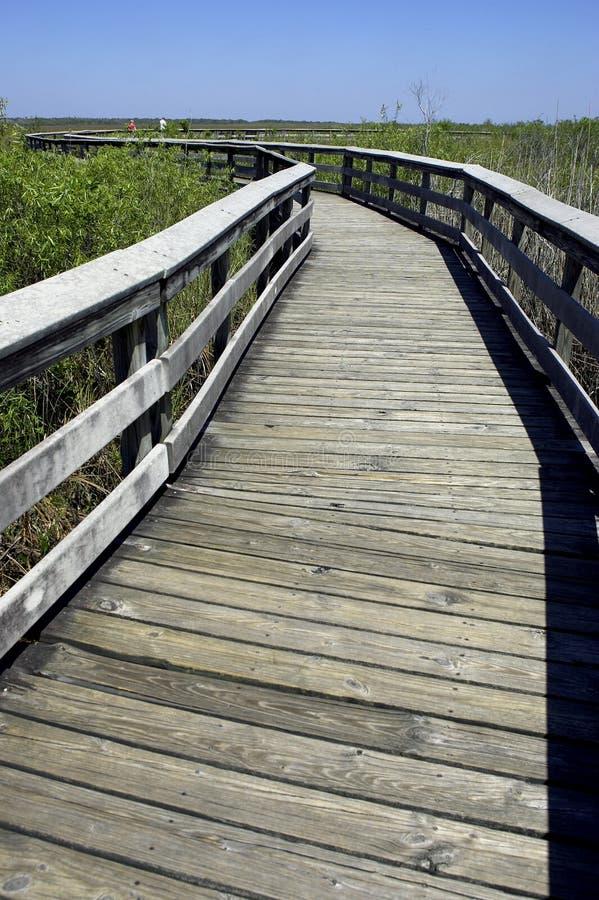 träwalkway för USA för trail för tillstånd för anhingaevergladesflorida nationalpark royaltyfri bild
