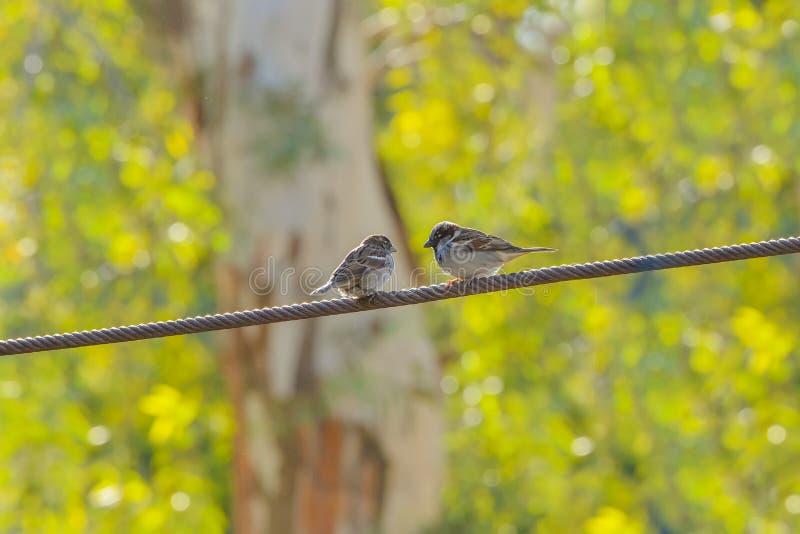 tråd för fåglar två royaltyfria foton