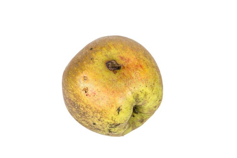 Tråkigt spår av en codlingmal Cydia Pomonella, i ett wormy äpple På vitbakgrund arkivfoto