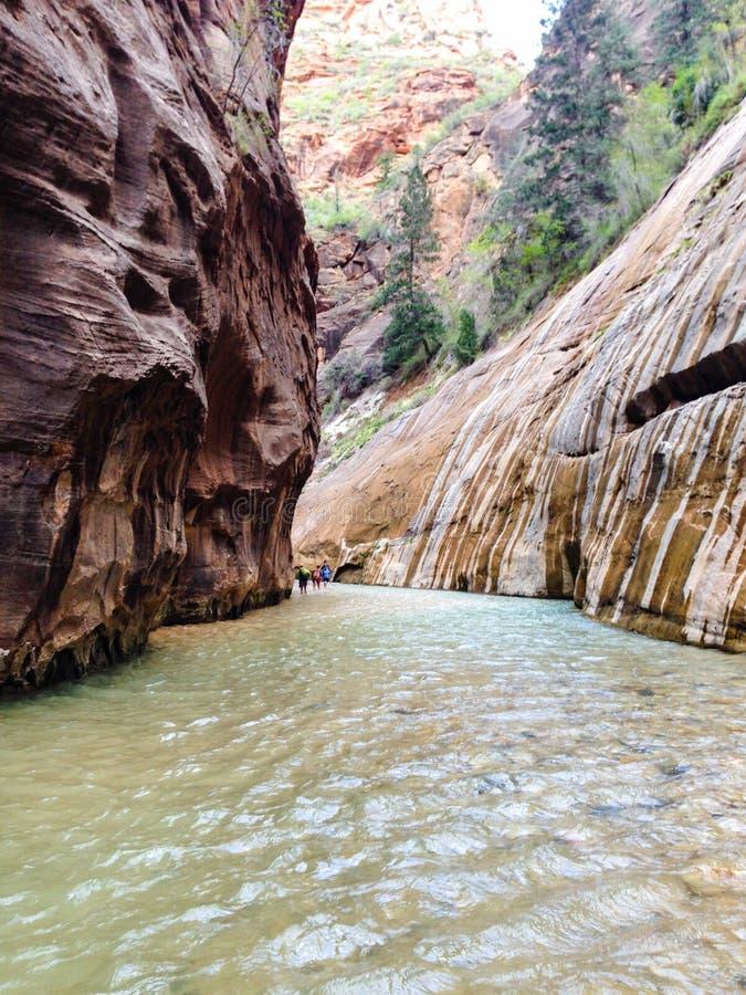 Trånga passet, jungfrulig flod, Zion National Park arkivbild