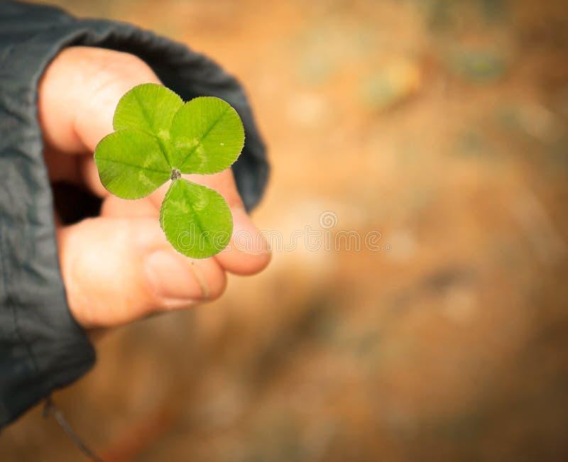 Trèfle chanceux de quatre feuilles photos libres de droits