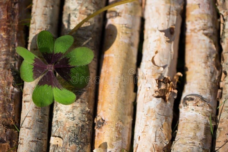 Trébol de cuatro hojas en fondo de madera imagenes de archivo