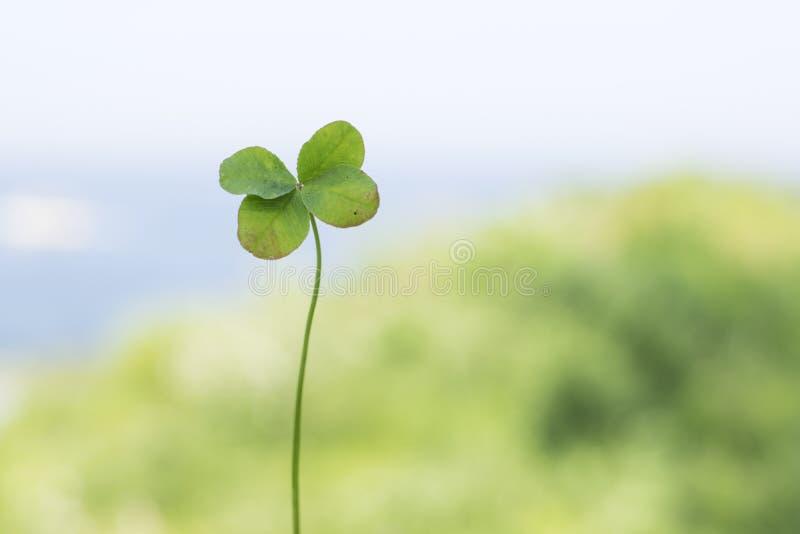 Trébol de cuatro hojas en fondo verde imagenes de archivo