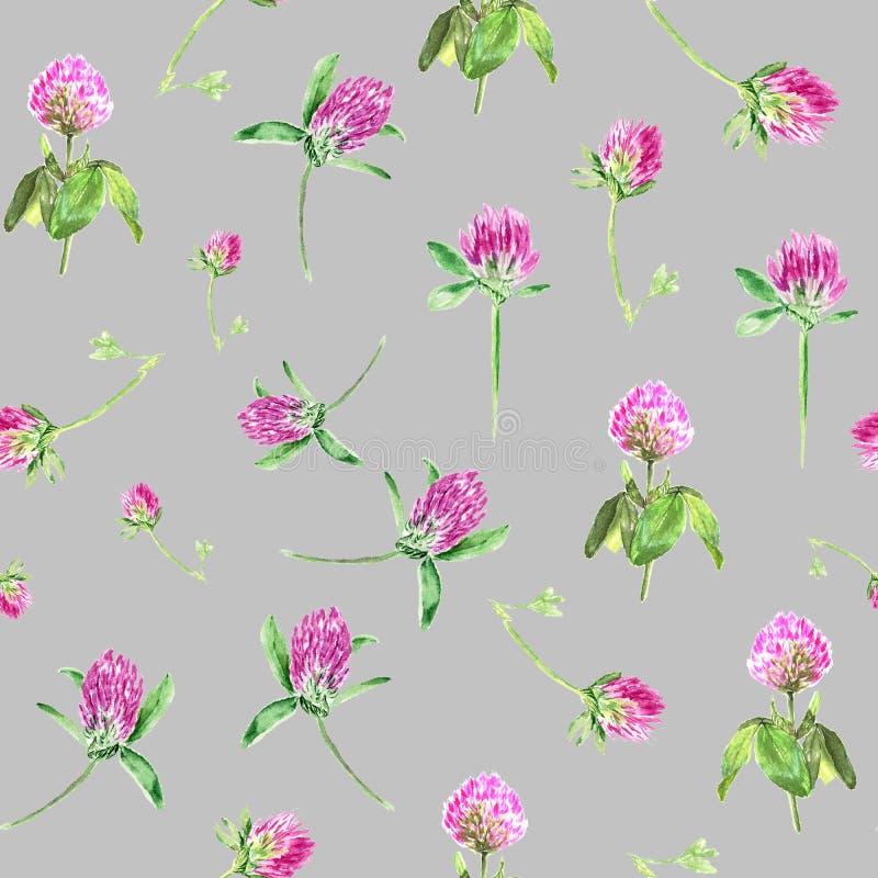 Trébol de la acuarela aislado en gris Modelo inconsútil apacible con el trébol rosado floreciente Papel pintado botánico lindo ad ilustración del vector