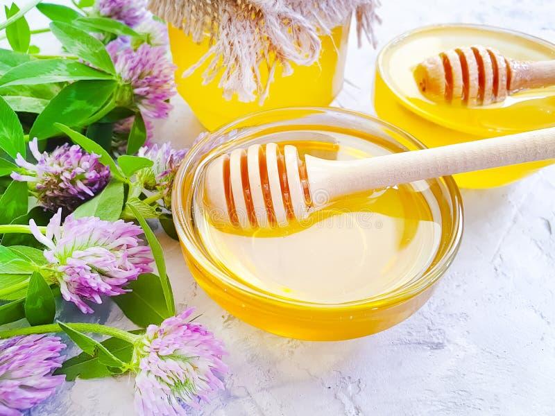 Trébol delicioso natural aromático de la flor fresca de la miel en fondo concreto gris imagen de archivo libre de regalías