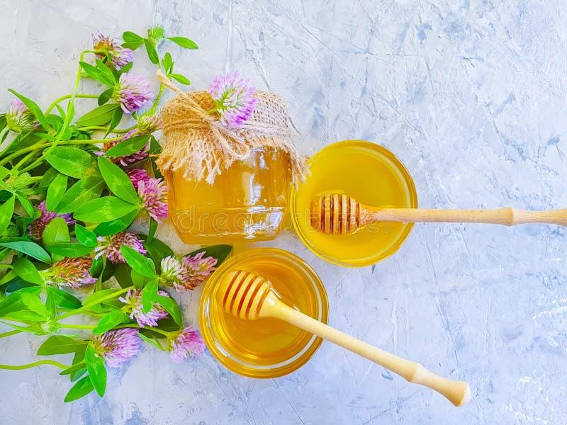 Trébol delicioso natural de la flor fresca de la miel en fondo concreto gris imágenes de archivo libres de regalías