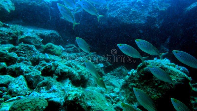 Trésor sous-marin 1 photos stock