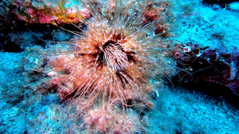 Trésor sous-marin 1 images stock