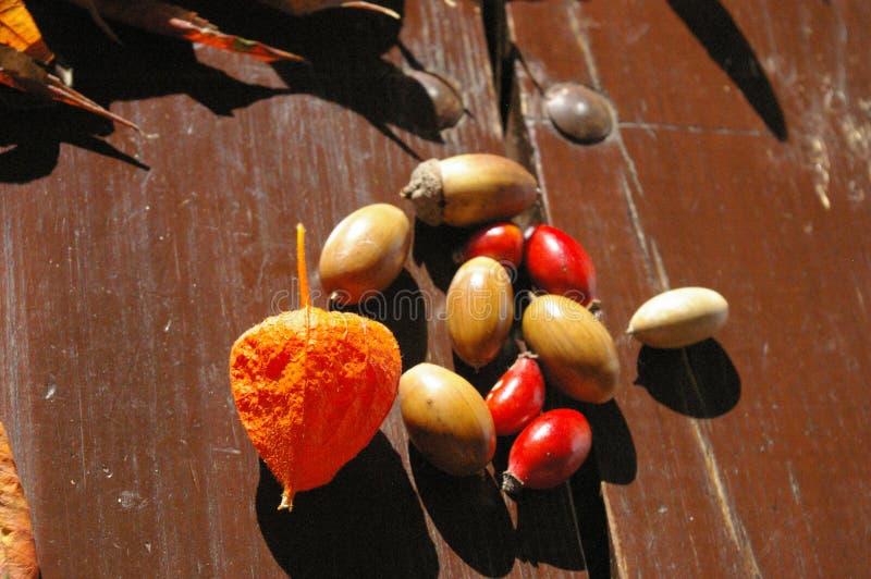 Trésors colorés d'automne sur la table images libres de droits