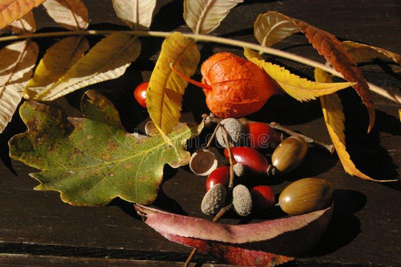 Trésors d'automne sur la table images libres de droits