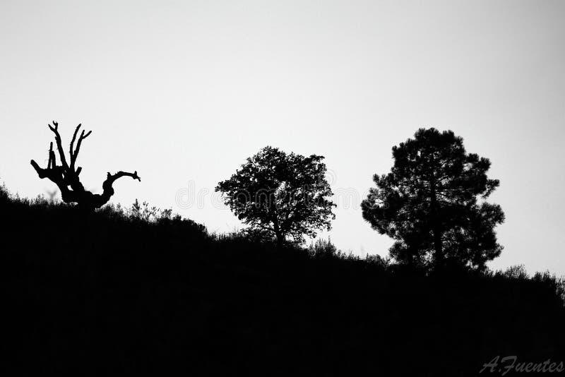 Três árvores fotografia de stock