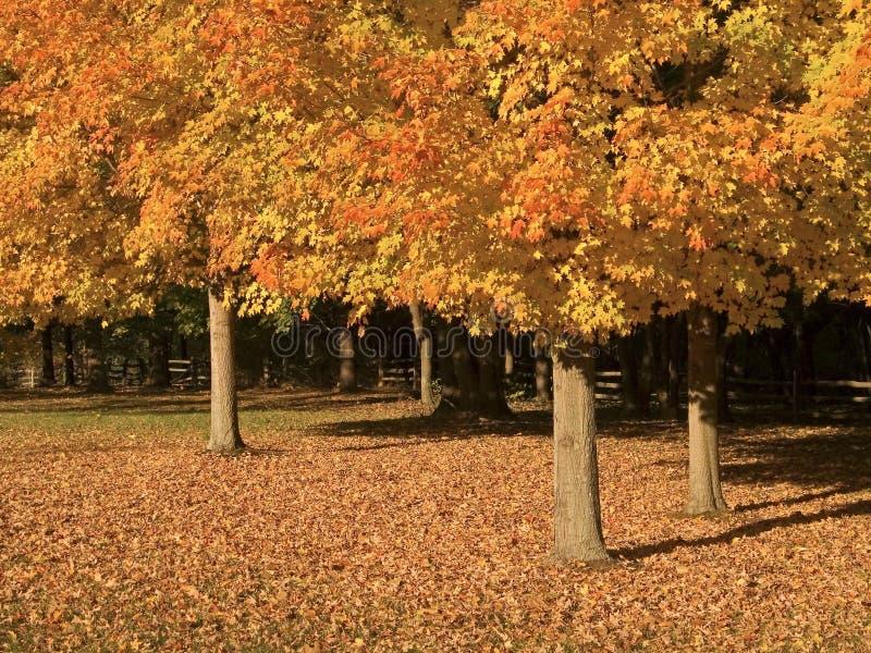 Três árvores da queda imagem de stock