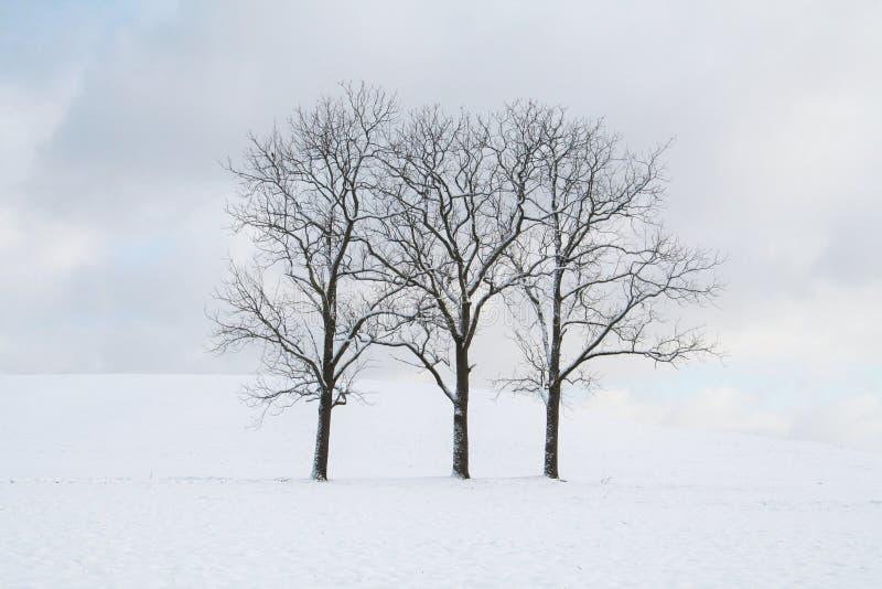 Três árvores desencapadas que estão em linha reta no arquivado da neve em um dia nebuloso fotografia de stock