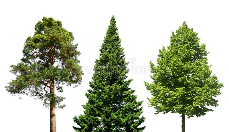 Três árvores no branco imagem de stock royalty free