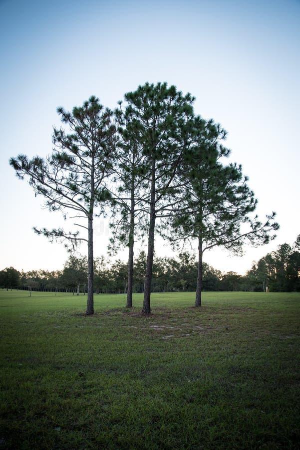 Três árvores sós foto de stock royalty free