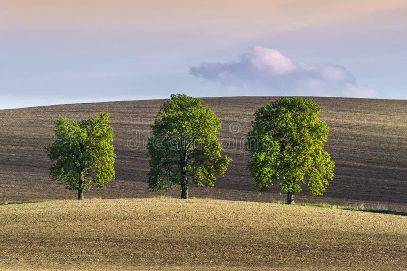 Três árvores sós na terra ondulada imagem de stock royalty free