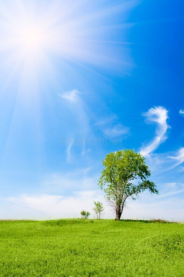 Três árvores sob o sol foto de stock