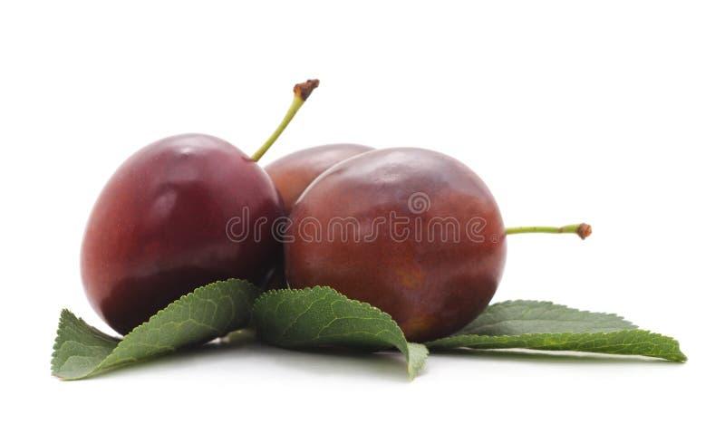 Três ameixas maduras fotos de stock