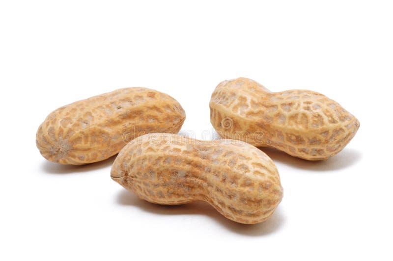 Três amendoins fotografia de stock royalty free