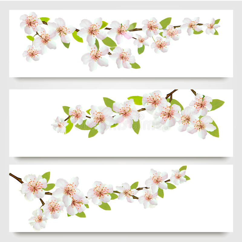 Três bandeiras dos ramos de sakura ilustração do vetor