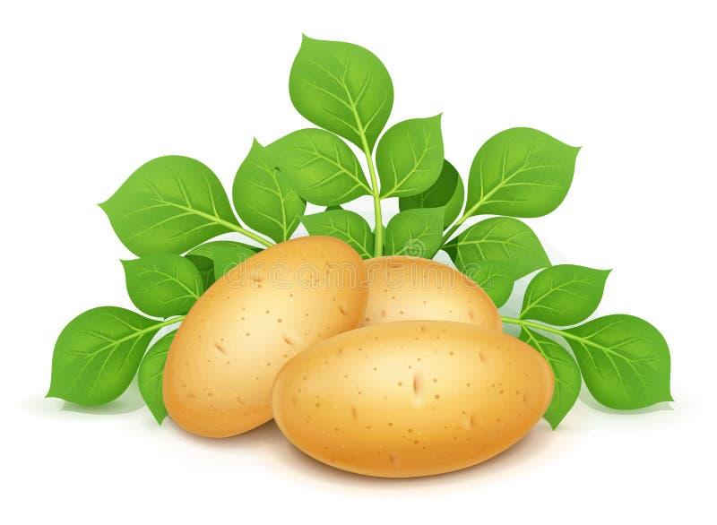 Três Três batatas com folhas Vegetal ?til Ilustra??o do vetor ilustração royalty free