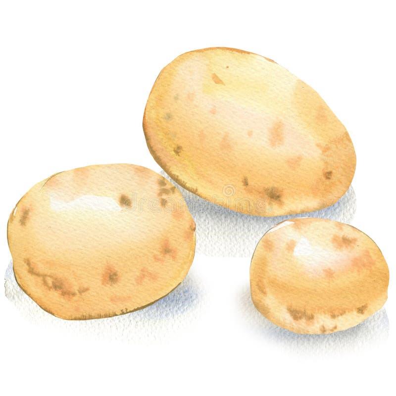 Três batatas cruas novas isoladas no fundo branco Colheita, vegetal inteiro orgânico fresco da batata, objeto do alimento imagens de stock