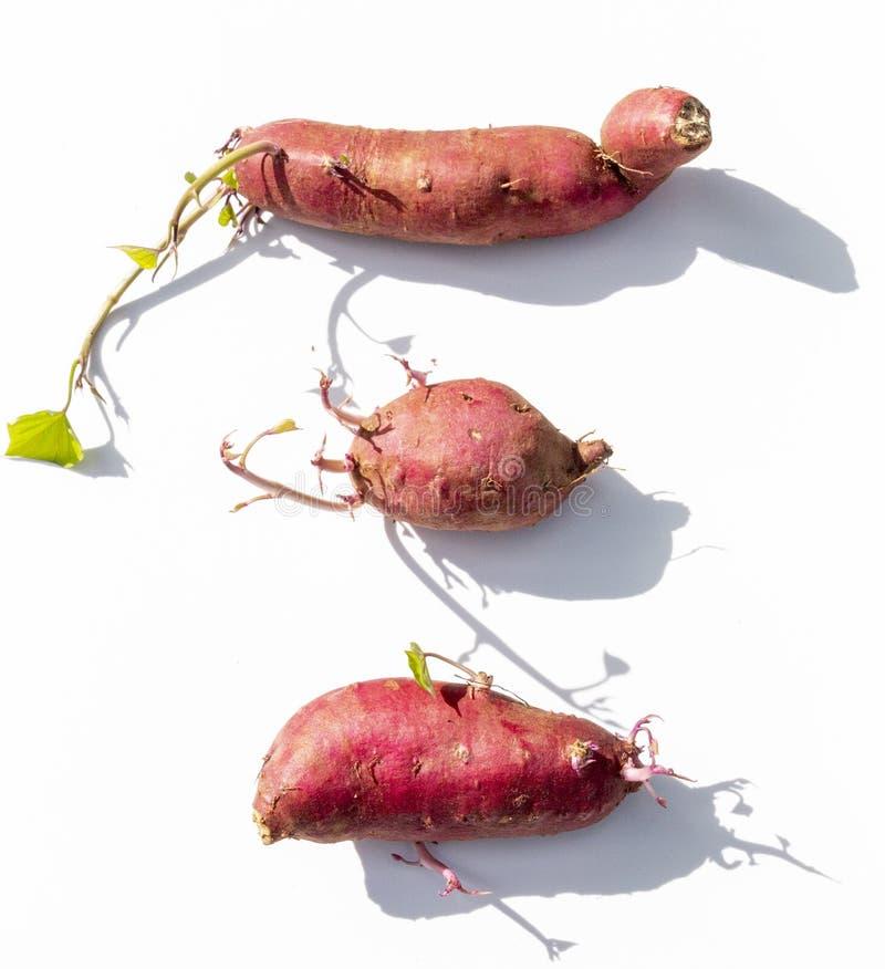 Três batatas doces imagens de stock royalty free