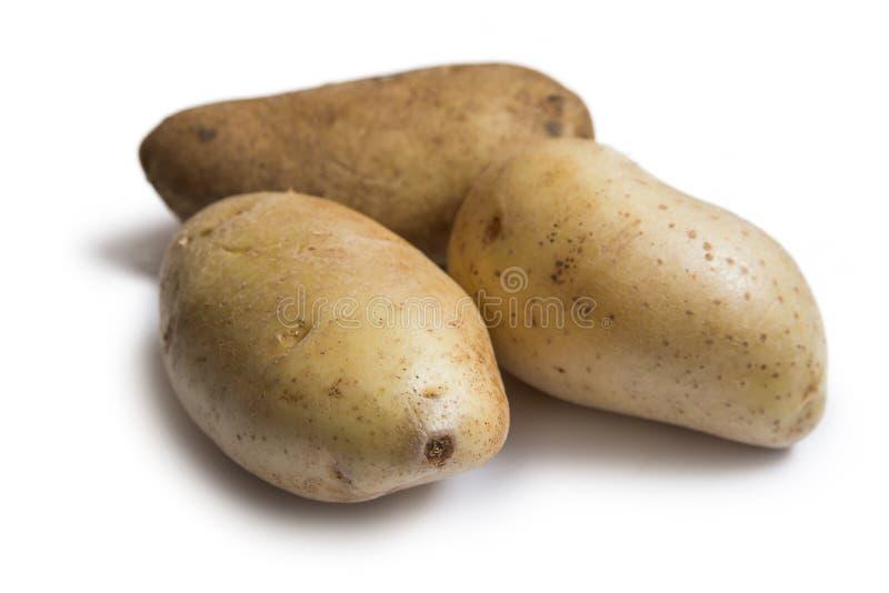 Três batatas frescas isoladas no fundo branco imagem de stock
