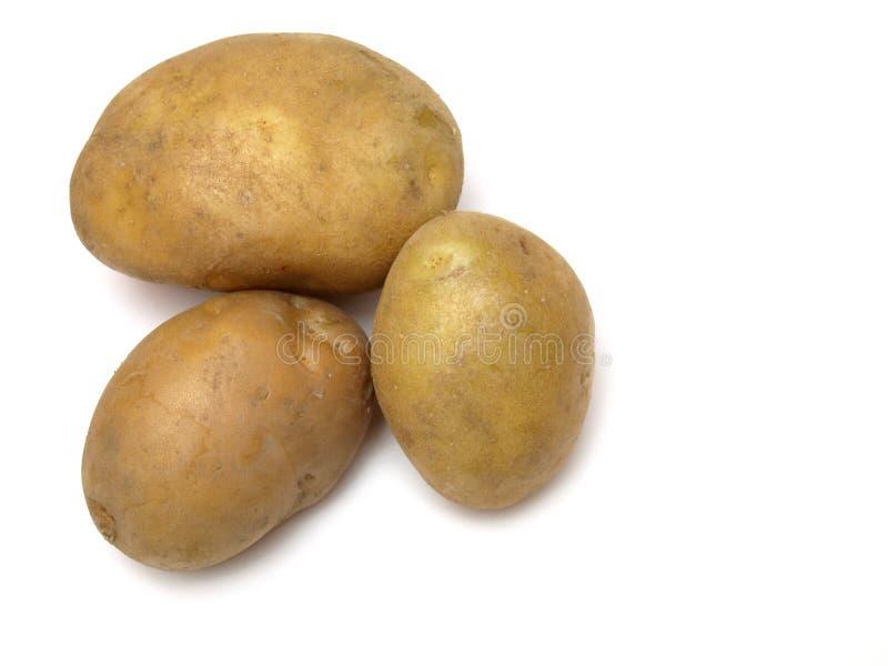 Três batatas no branco imagem de stock